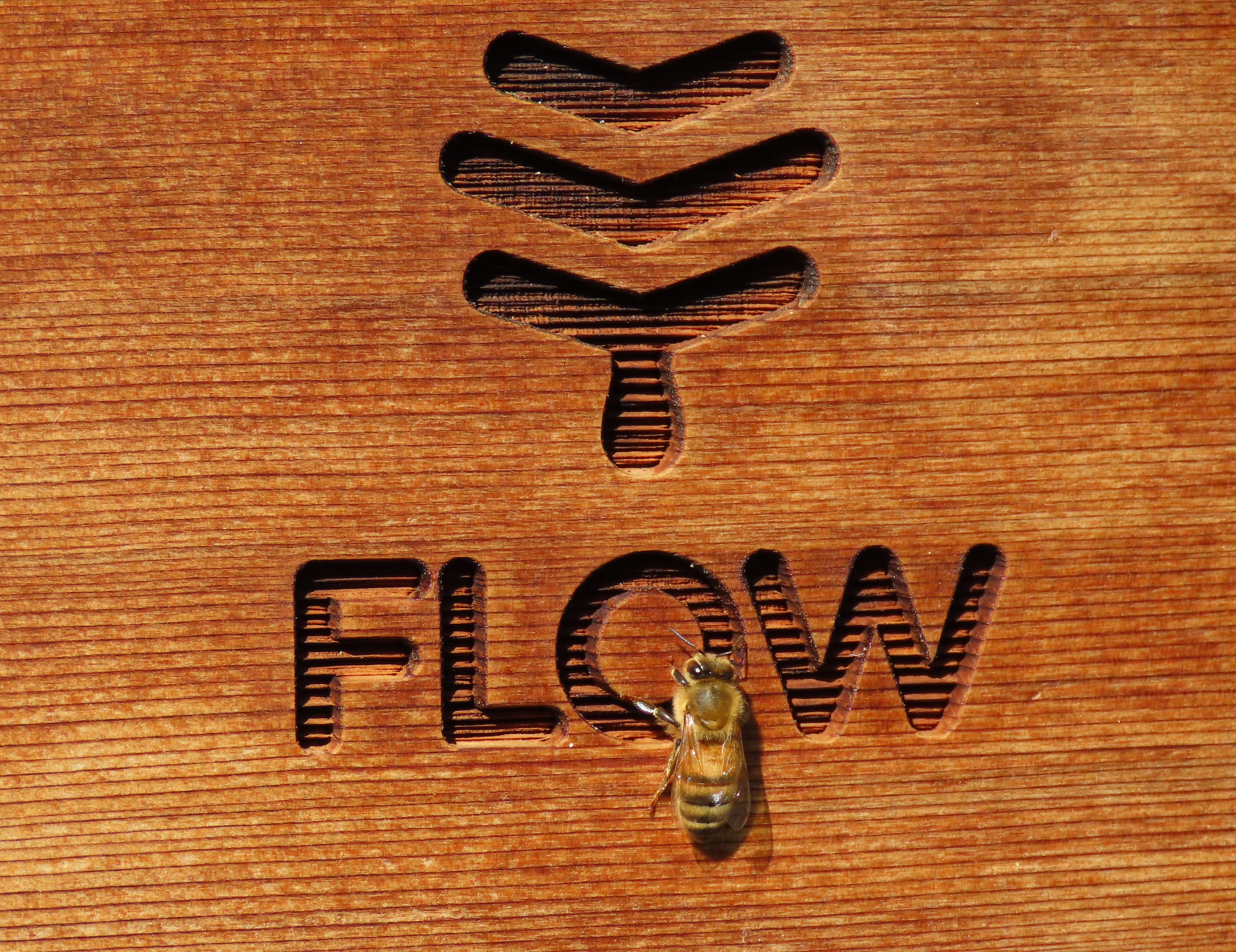 Flow Bee product
