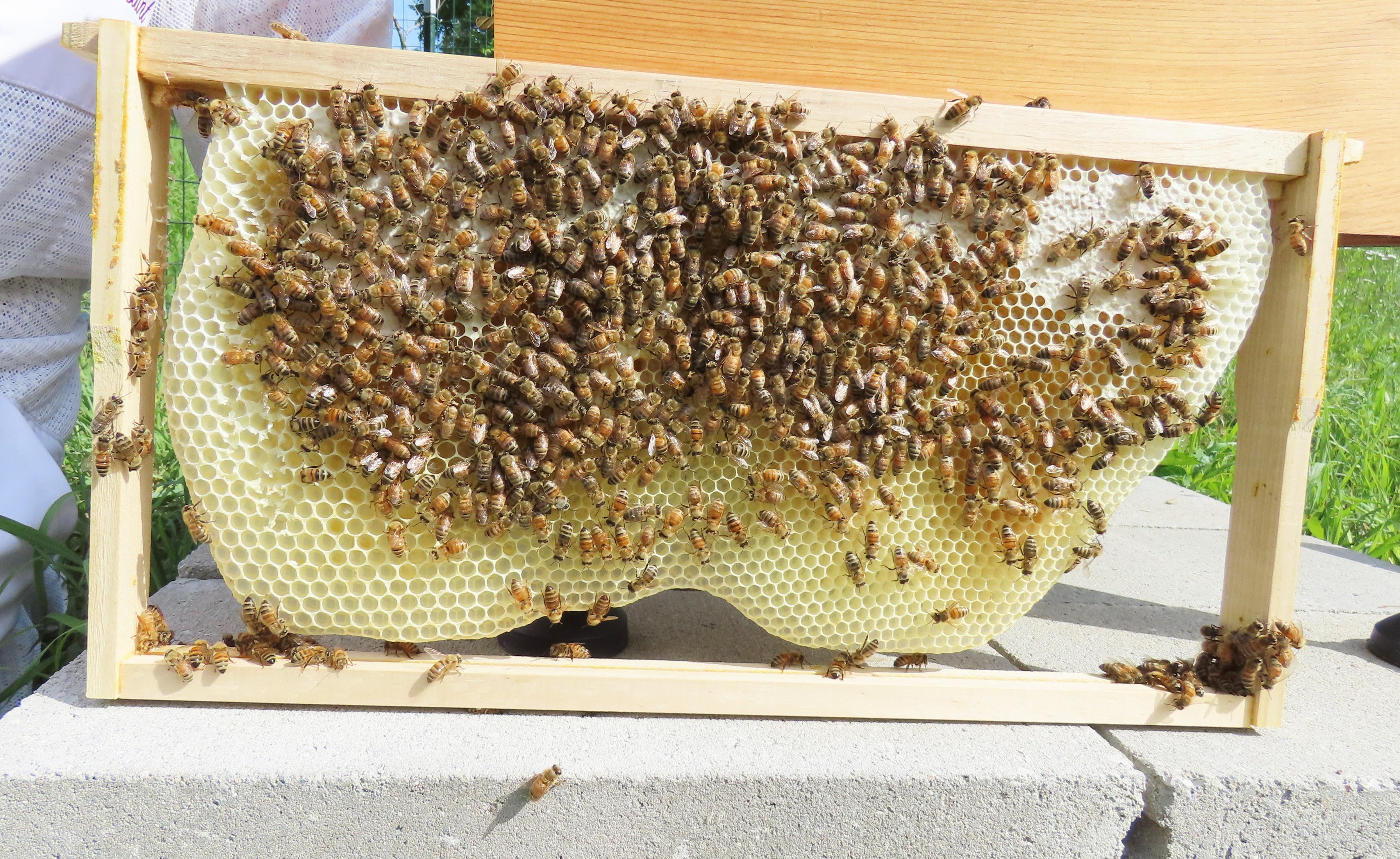 newly made honey comb
