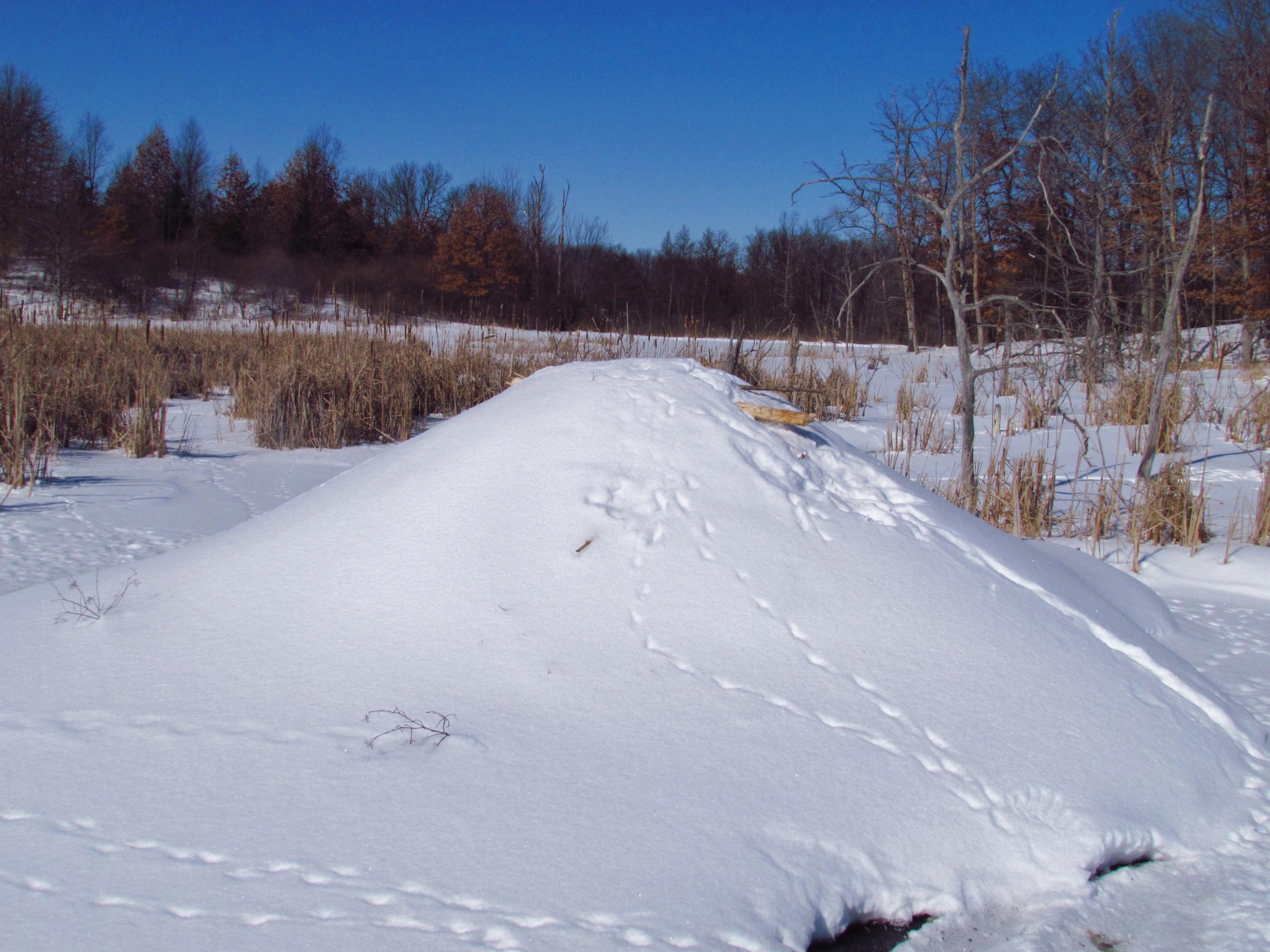 snow-covered beaver lodge