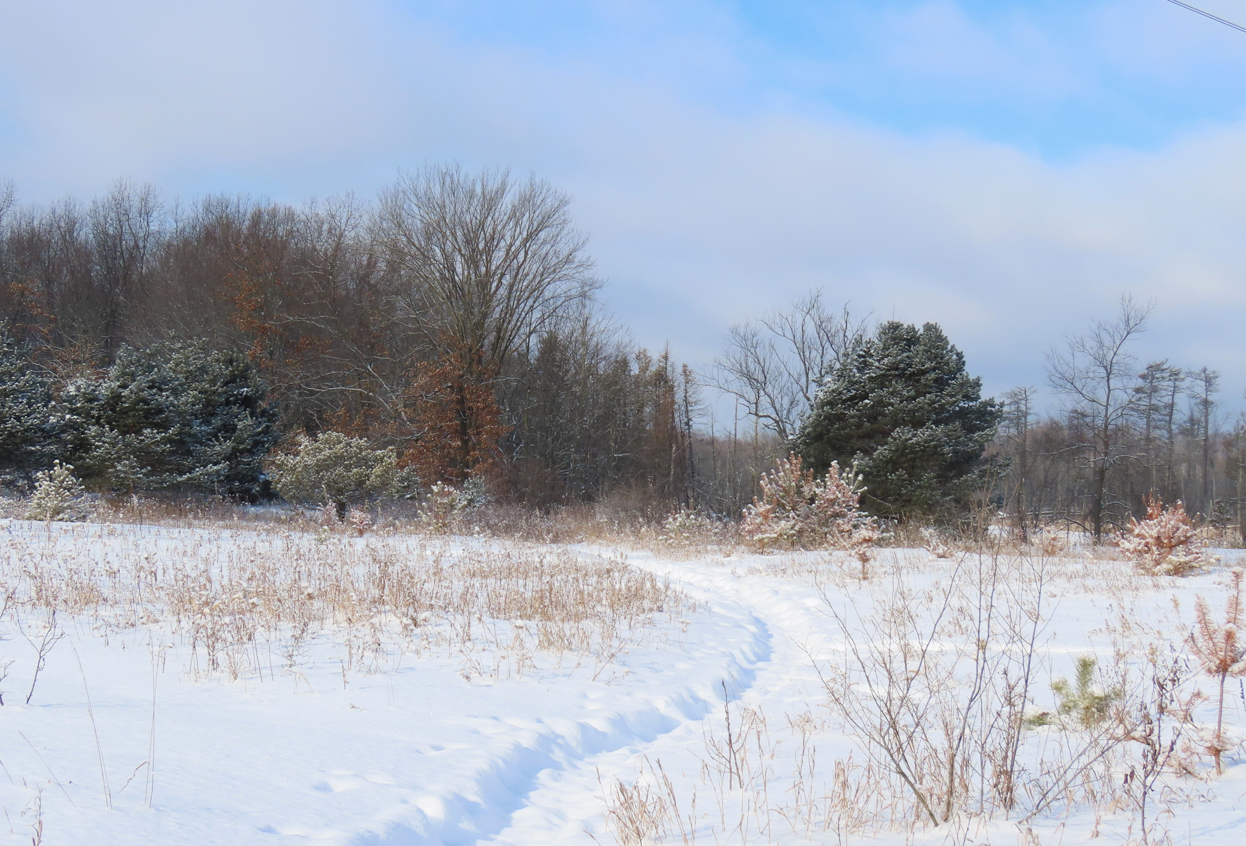 A snowshoe path winds through a snowy meadow