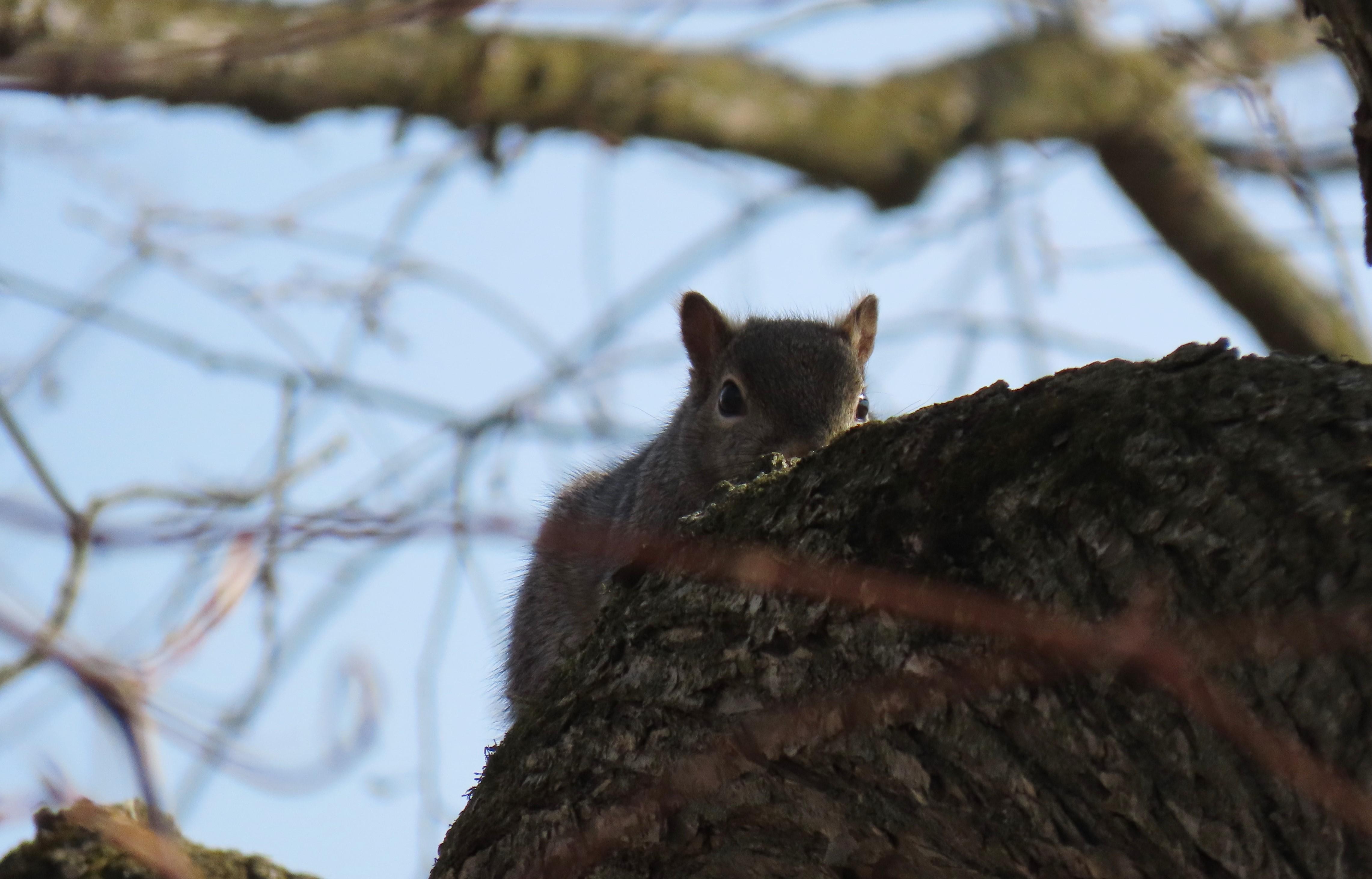 A squirrel, half hidden, rests on a tree branch