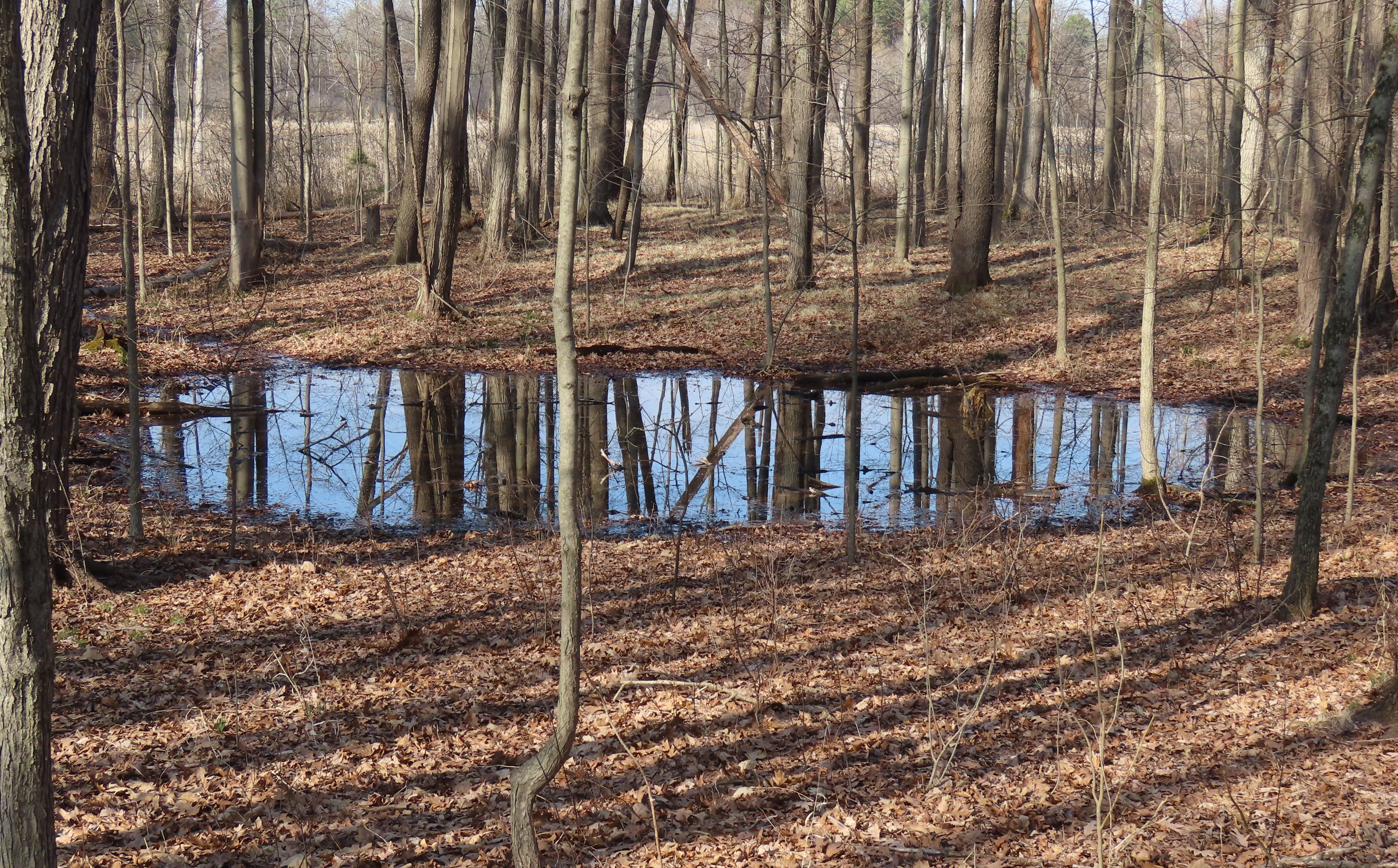 A vernal pond in a wooded area