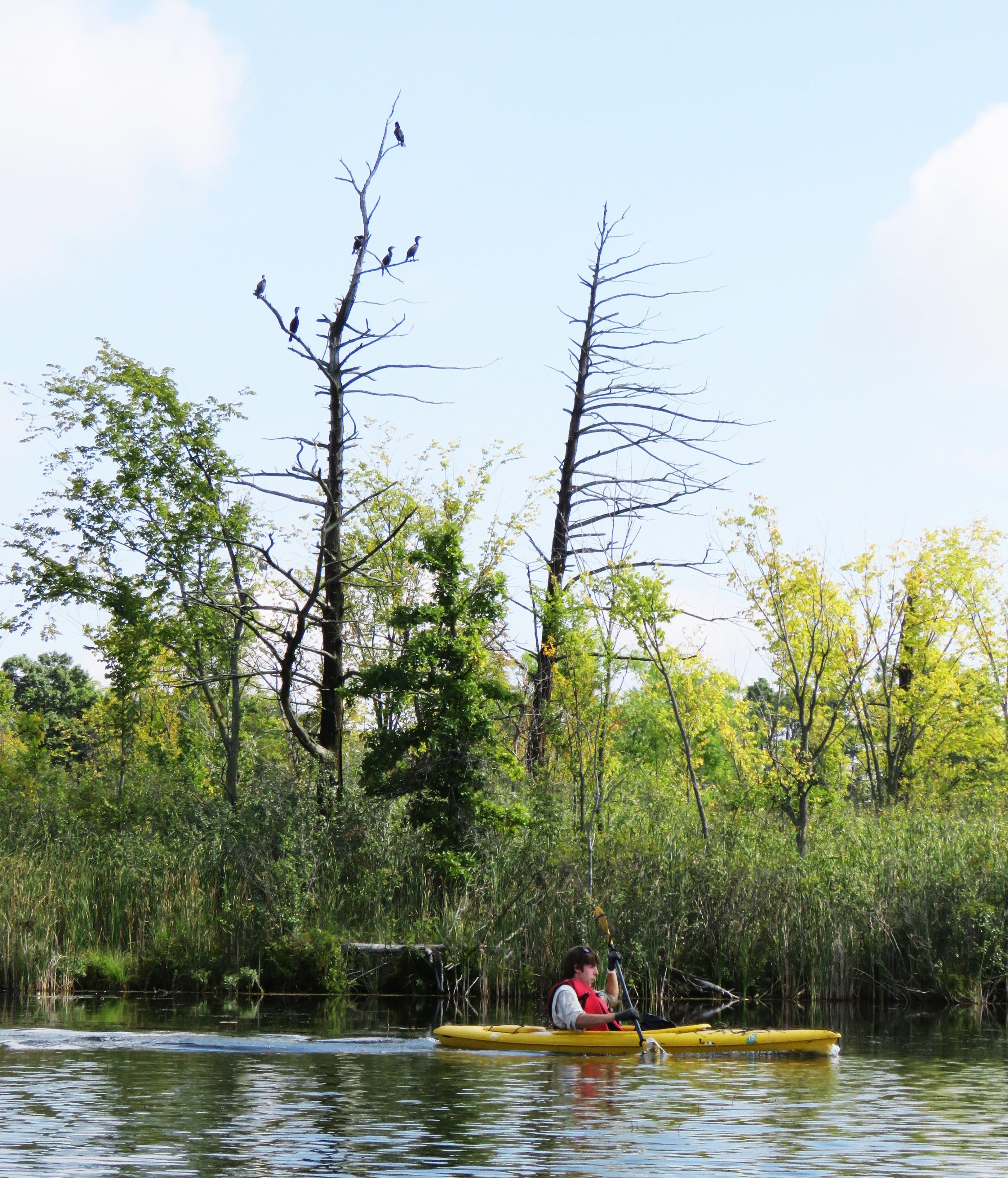 A kayaker paddles in a lake