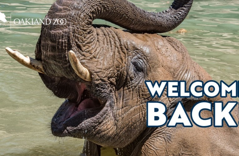 Welcome Back to Oakland Zoo!