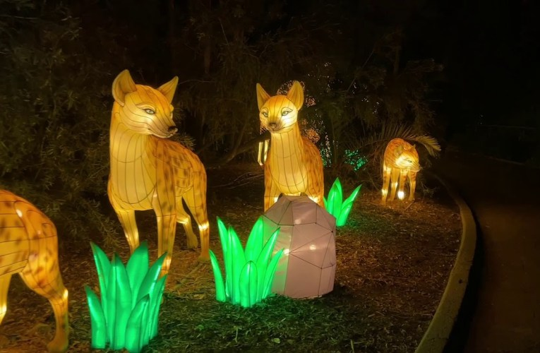 Oakland Zoolights 2020 YouTube Video By Adriaan Smit Shows Colorful Oakland Zoo Highlights