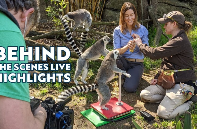 Oakland Zoo Behind the Scenes Live Highlights