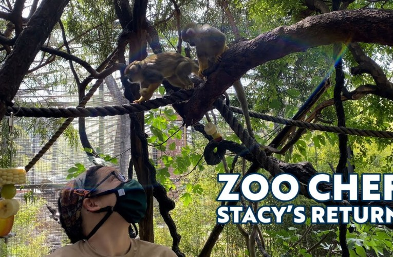 """The Return of """"Zoo Chef"""" Stacy!"""