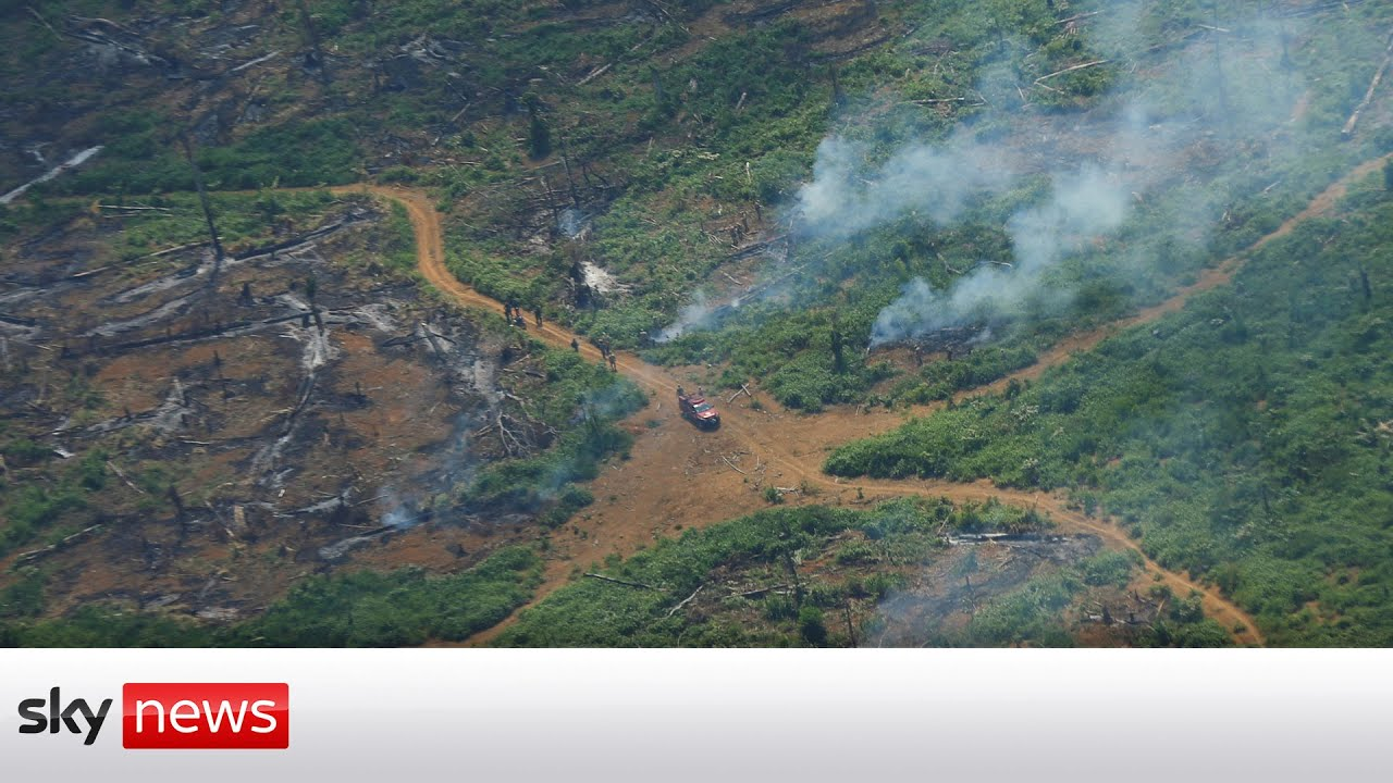 Household banks invest billions in firms involved in deforestation, report claims - Blog