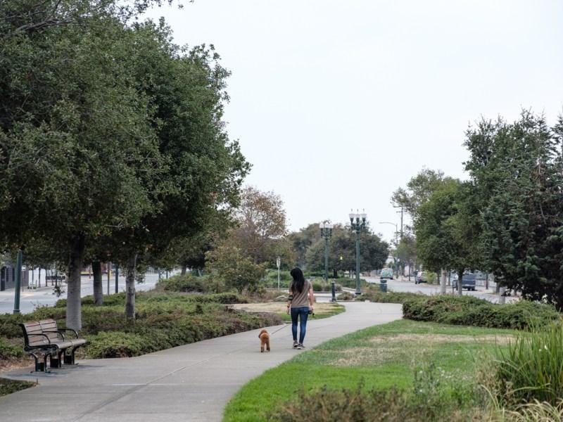 a woman walking her dog along Mandela Parkway