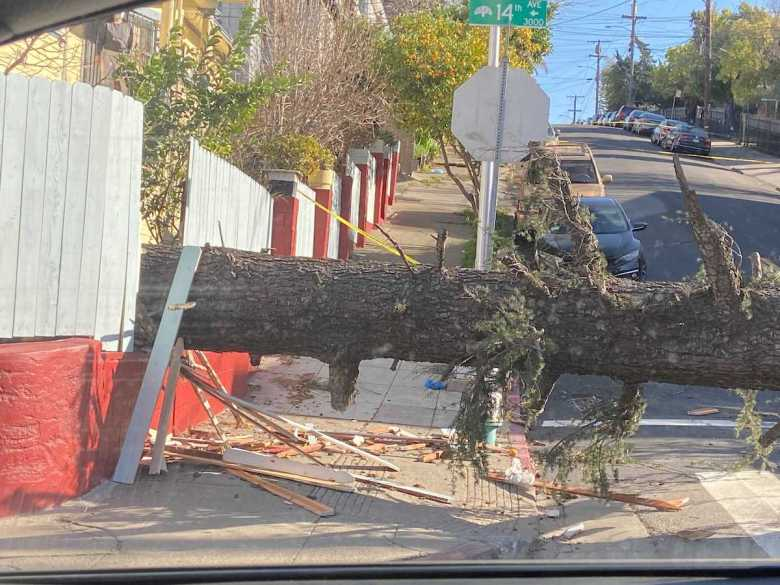 horizontal tree across street and sidewalk