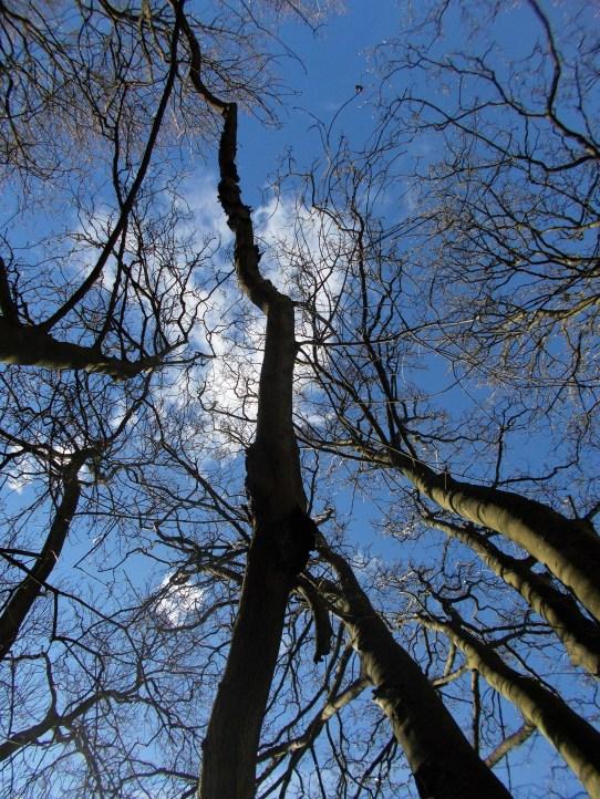 NuR 4 April tree 1 uper trunk 2