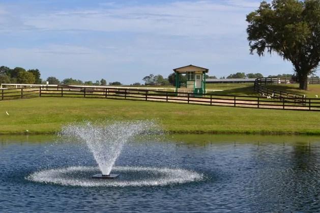 Oak-Ridge-Training-Center- racehorse