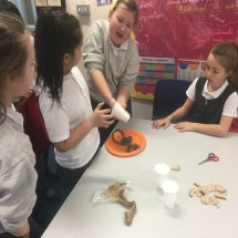 Investigating the Digestive System 8