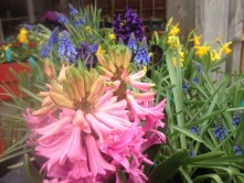 Spring Bulbs