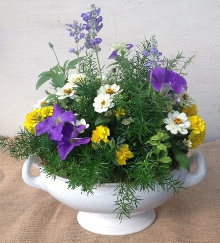 Pinkie created this piece in a customer's container for a party using bedding plants and asparagus fern...