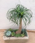 Trough...Pony Tail Palm and Succulents
