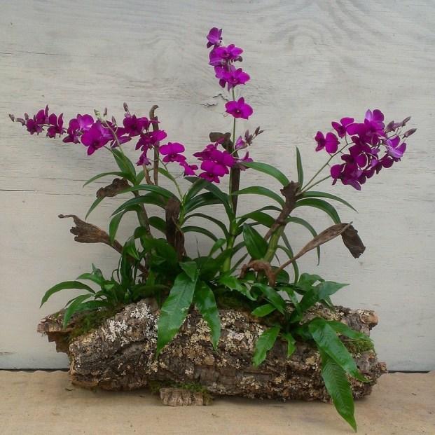 Fall Orchid Arrangement