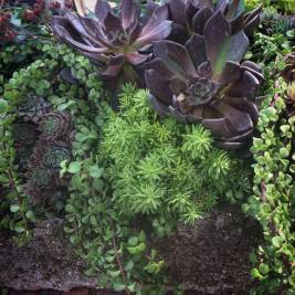 Trough Planted with Succulents - Close-Up