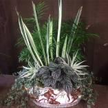 Indoor Arrangement - 'Bantel's Sensation' Sanseveria, Palm, Pepperomia, Pilea