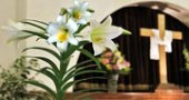 Easter Lily Memorial Sale, Oakwood United Methodist Church, Lubbock Texas