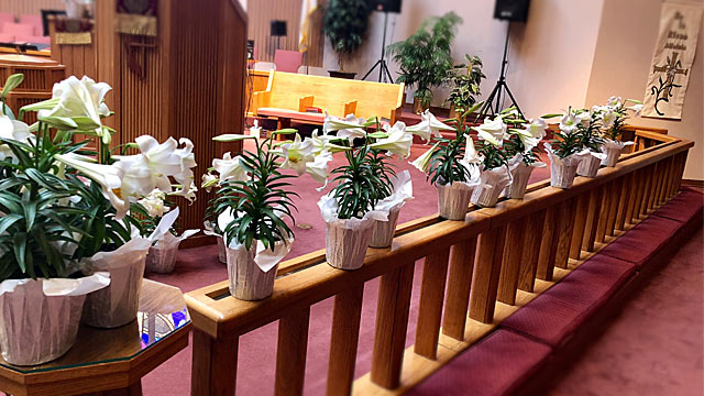 Easter Service, Lilies On Kneeling Rail, Oakwood United Methodist Church, Lubbock Texas