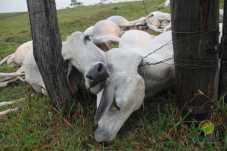 gador morto-81