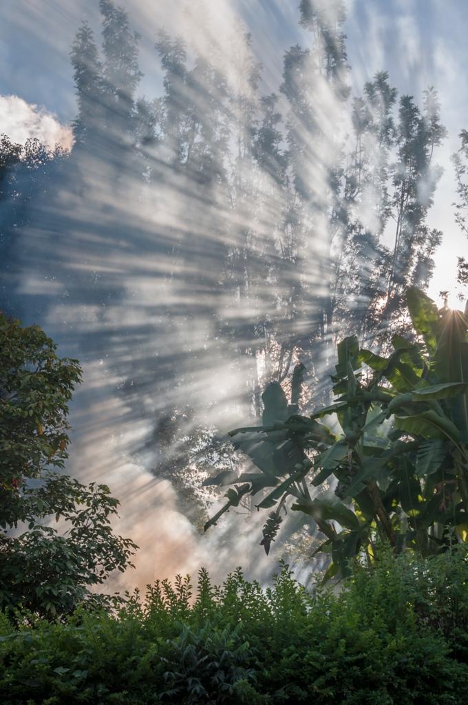 Lumina se filtreaza printre copacii din Muntii Pindaya_Myanmar