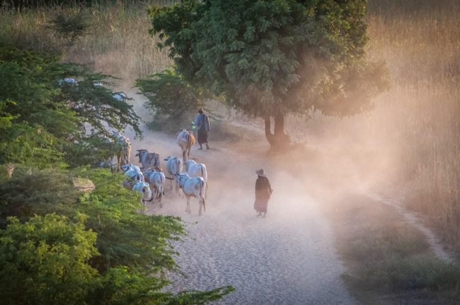 Sfaristul unei zile in campia Baganului_Myanmar