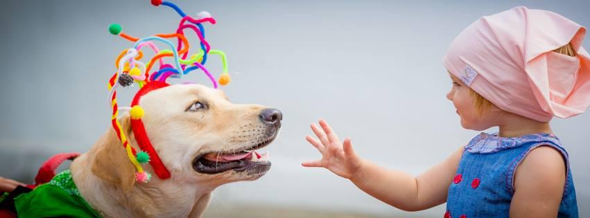 happy-cainele-de-terapie-de-la-grupul-de-terapie-si-activitati-asistate-de-animale-bucuresti-_-foto-bogdan-buda-2