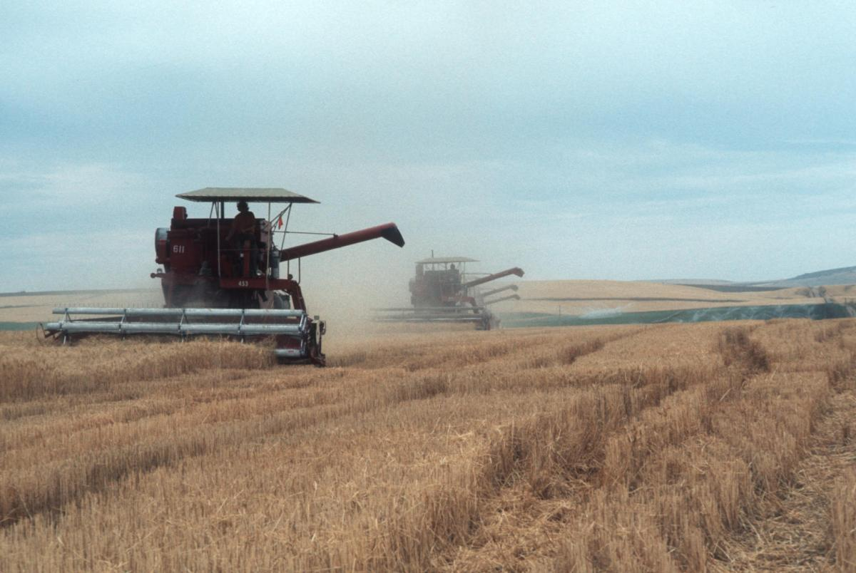 Wheat harvest combine
