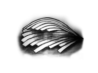 sketchs5psd