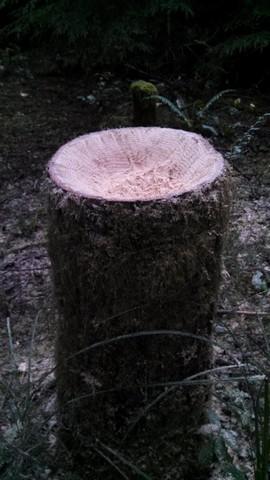 Birdbath Stump1