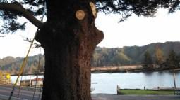 Blue Heron Inn View 3