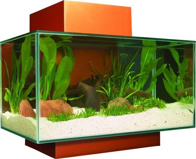 imagen acuario