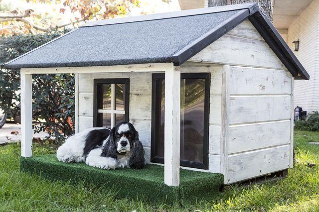 imagen casa para perro