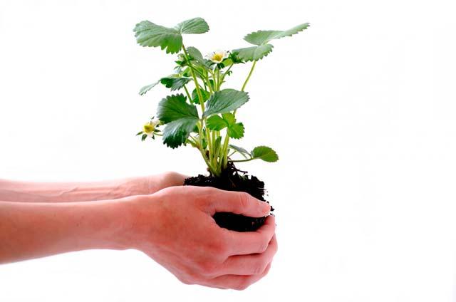 imagen fertilizantes y abonos