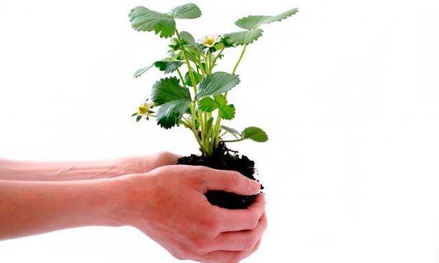 Fertilizantes/Abonos