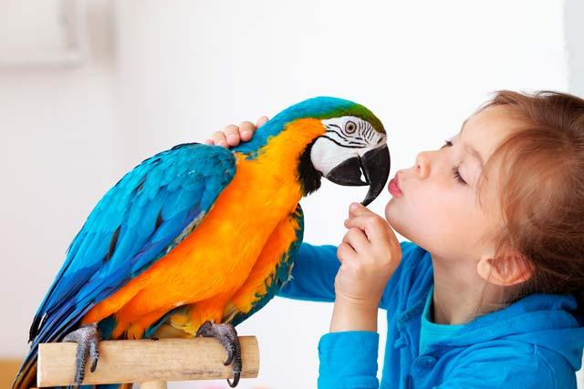 imagen jaulas, voladeros y accesorios para mascotas