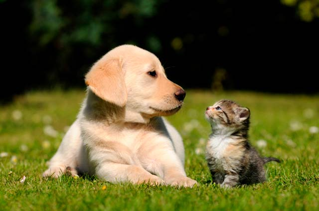 imagen suplementos alimenticios para perros y gatos