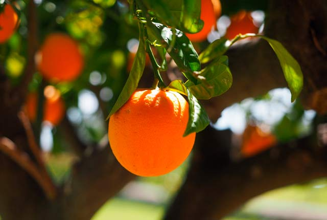 imagen árboles frutales