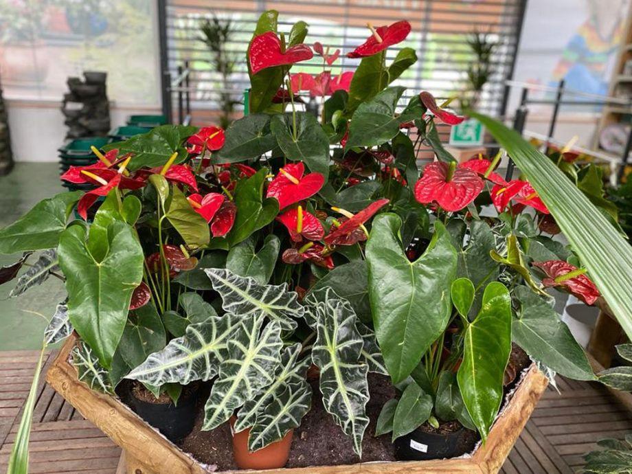 planta interior con flor
