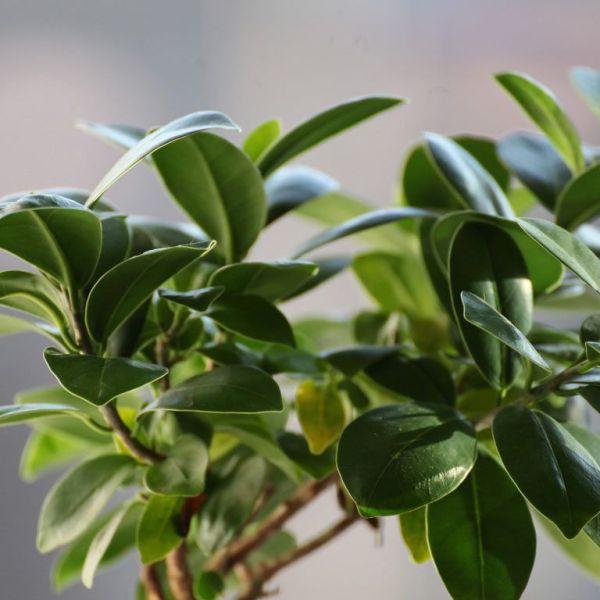 planta interior vede