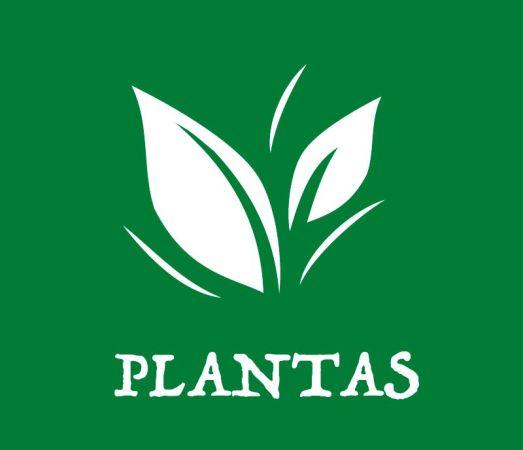 secciones-plantas
