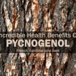 pycnogenol incredible health benefits