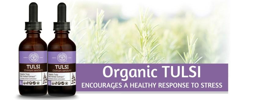 Organic Tulsi/Holy Basil