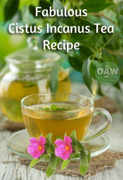 Fabulous Cistus Incanus Tea Recipe