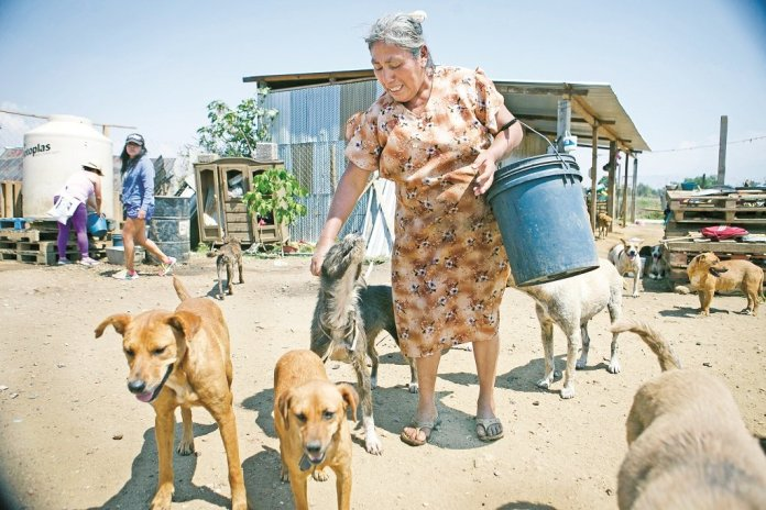 Desbordado, refugio de perros en Zaachila | Oaxaca