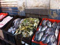Fish Market Puebla SK