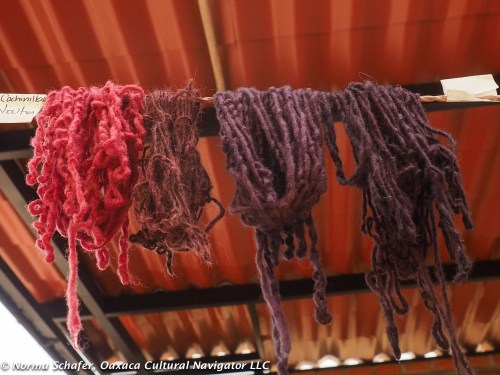 Cochineal and variation to purple with indigo overdye