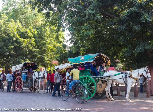 Festooned horse-drawn carriages take people around Agra town.